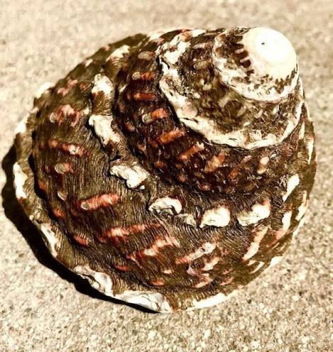 shelltop
