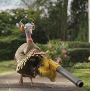 turkeyleaf (2)