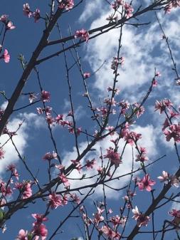 blooms1